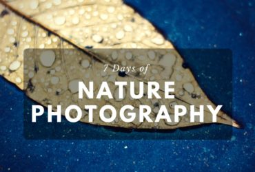7 Days of Nature Photography